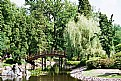 Picture Title - Japanese Garden-lake 2
