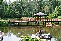 Picture Title - Japanese Garden-lake 3