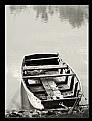 Picture Title - Alone