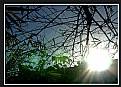 Picture Title - brilho eterno