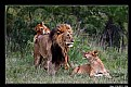 Picture Title - Simba Family