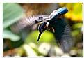 Picture Title - martintuffo