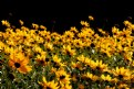 Picture Title - summer flowers II