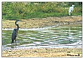 Picture Title - Lake scene 1