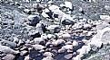 Picture Title - Alpine Stream