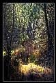 Picture Title - luci nel bosco