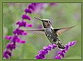 Picture Title - Hummer