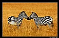 Picture Title - Striped Kiss
