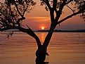 Picture Title - Sunset and Tree