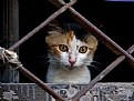 Picture Title - Cat