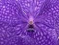 Picture Title - violet pilot