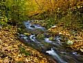 Picture Title - Autumn-2