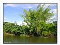 Picture Title - Bambu
