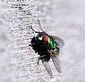 Picture Title - A Fly on the Wall