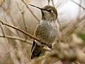 Picture Title - Hummingbird