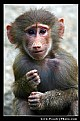 Picture Title - little monky