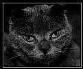 Picture Title - Blue cat