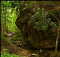 Picture Title - Emerald Forest