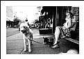 Picture Title - perros urbanos