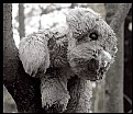 Picture Title - Dull-Eyed & Sodden