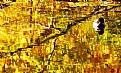 Picture Title - Autumn Mosaic