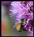 Picture Title - Busy Bee