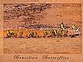 Picture Title - Brasilian Butterflies