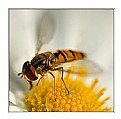 Picture Title - Bee and Flower