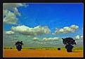 Picture Title - Trakya Scenery