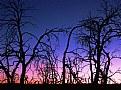 Bare Trees @ Sunset