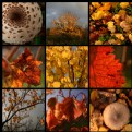 united colors of autumn