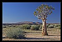 Picture Title - Desert with Quiver Tree