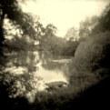 Picture Title - Shalott
