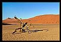 Picture Title - Desert