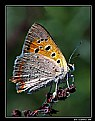 Picture Title - butterfly 1