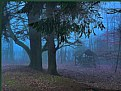 Picture Title - In the enchanted forest....