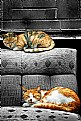 Picture Title - Sleepy Cats
