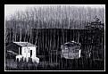 Picture Title - Vecchie case tra i giovani pioppi