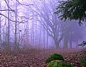 Picture Title -  The whispers of the forest... II