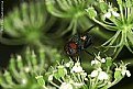 Picture Title - Fly i n Greens