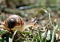 Picture Title - Baby Snail