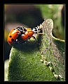 Picture Title - Beetles in Action