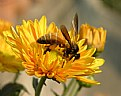 Picture Title - bee there