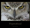 Picture Title - Hypnotised