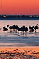 Picture Title - Sleeping Flamingos