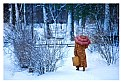 Picture Title - A Walk in the snow