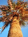 Picture Title - The Palm Tree