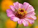 Picture Title - Flowerhopper