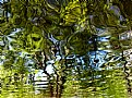Picture Title - Alien Reflections