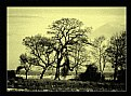 Picture Title - singing trees